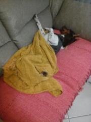 Filhotes terrier brasileiro canil pedra de guaratiba dj da pedra de guaratiba. sono pesado! nascimento: 01/11/09. proprietária: sonia. visite nossa página! http://www.canilpguaratiba.com/html/filhotes_tb.html