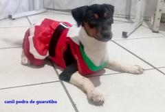 FÊmea tricolor disponível! raça beagle! nascimento: 24/09/17. visite nossa página! não perca essa oportunidade! agende uma visita!! http://www.canilpguaratiba.com/index.html