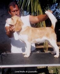 Canil Pedra de Guaratiba 28 anos. Raça Beagle! Criação selecionada! Conheça nosso trabalho. Agende uma visita!! http://www.canilpguaratiba.com/index.html