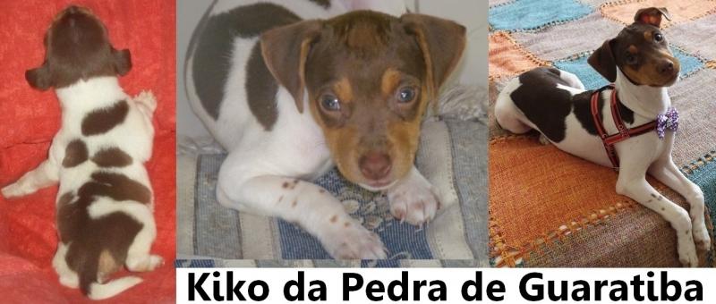 PARABÉNS ATRASADO!  No dia 07/06/18 o Kiko fez 3 aninhos. Parabéns Kiko! Parabéns Paulo pelo carinho e dedicação! Muito obrigado! Visite nossa página! Terrier Brasileiro Fox Paulistinha http://www.canilpguaratiba.com/html/filhotes_tb.html