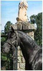 Cavalo �rabe
