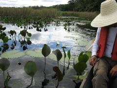 Marimbus, o pantanal da chapada diamantina