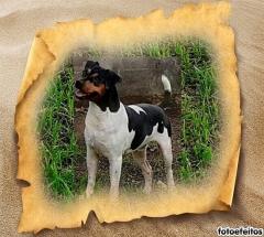Patatá da pedra de guaratiba! companheiro insuperável! excelente cão de alarme! temperamento equilibrado! tipicidade! beleza! canil pedra de guaratiba 31 anos! e-mail: canilpguaratiba@gmail.com zap: (21)98168-5544 site: http://www.canilpguaratiba.com