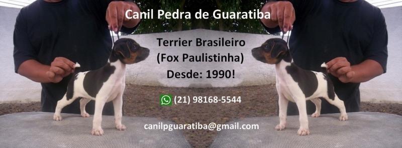 Canil Pedra de Guaratiba Filhotes disponíveis! WhatsApp: (21) 98168-5544. E-mail: canilpguaratiba@gmail.com  Site: http://www.canilpguaratiba.com