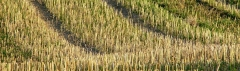Agrototal produtos agropecuários