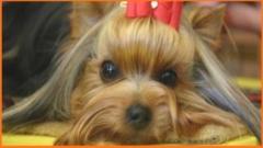 Avicultura divino pet shop