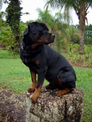 Cães na natureza