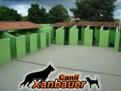 Canil Xanbauer - Instalações