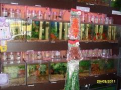 Pet shop aquários  - foto 8