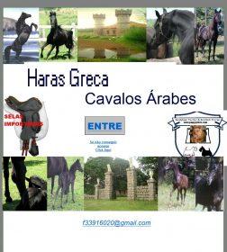 Haras Greca - Cavalo Arabe e Friesian